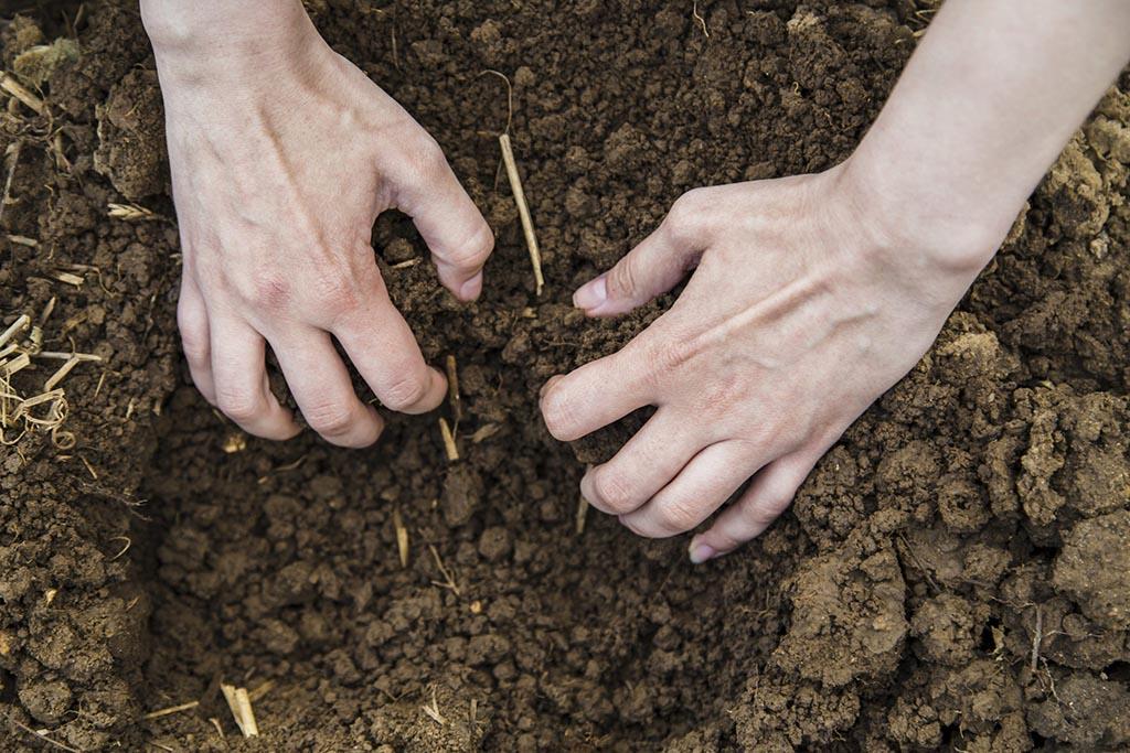 Кто и для чего берет землю с могил