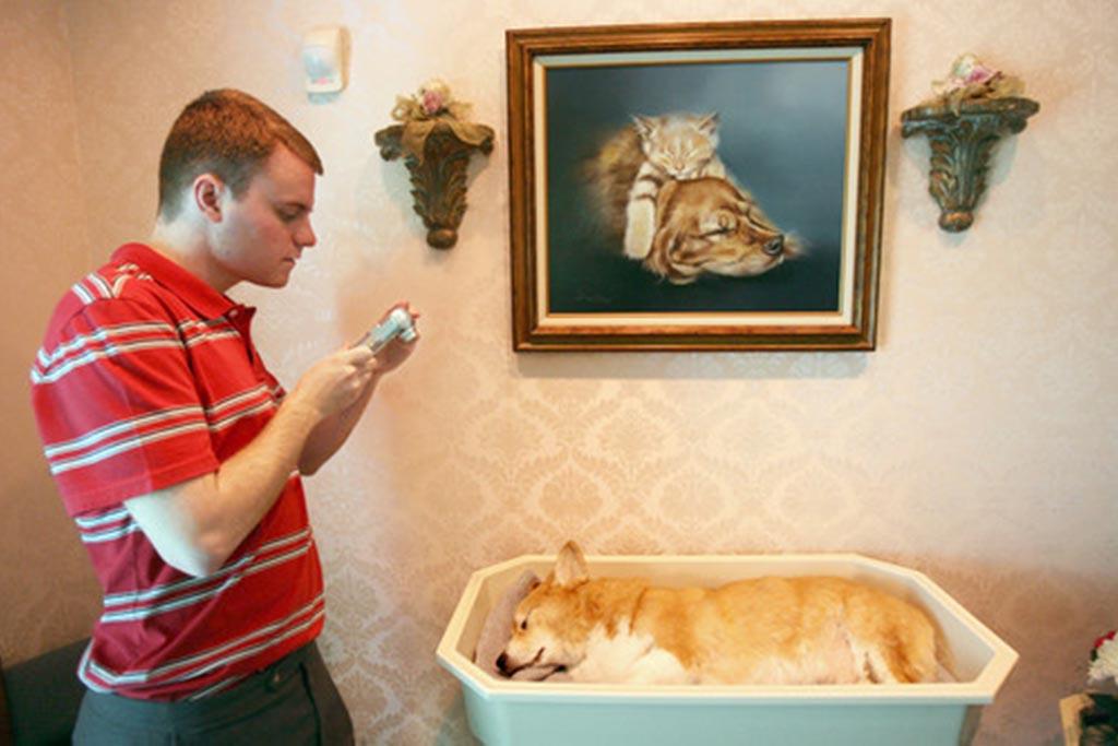 Можно ли фотографировать собаку после усыпления на память