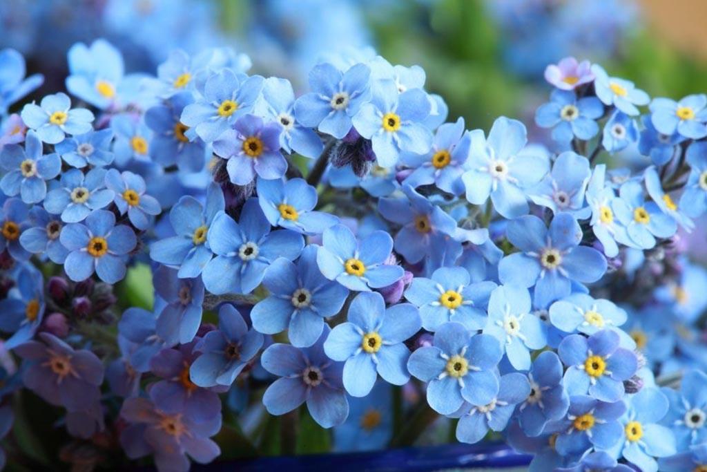 Похоронная цветочная флора