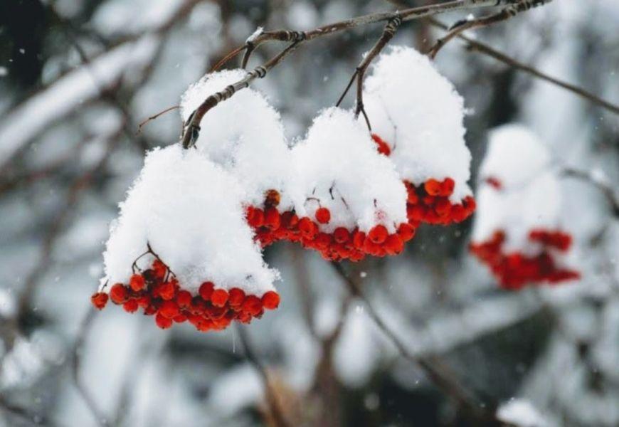 На Покрова выпал снег, зима будет суровой