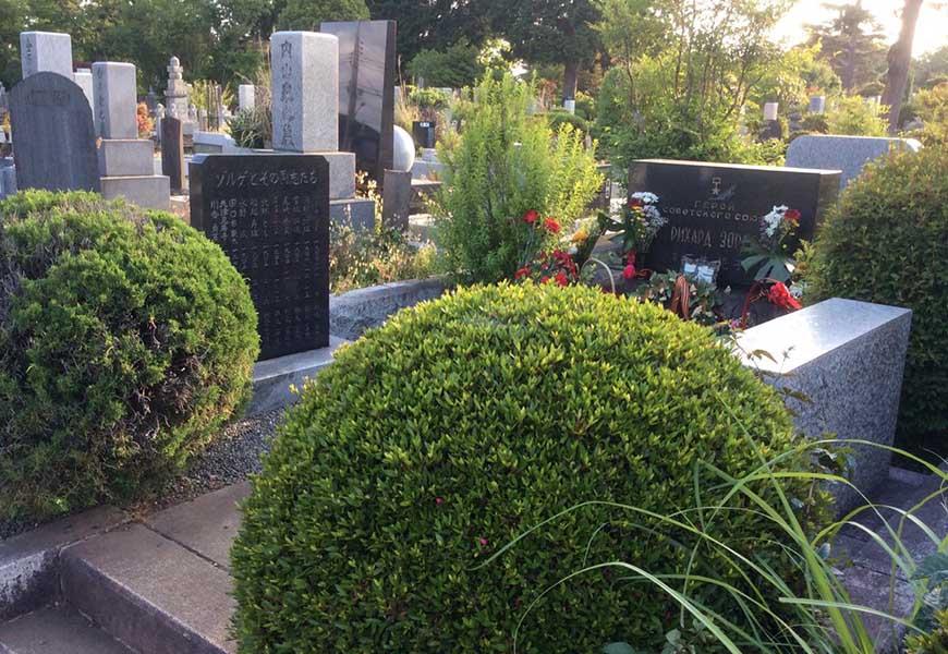 Самшит на кладбище